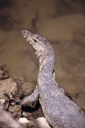 young malay monitor-AsiaPhotoStock