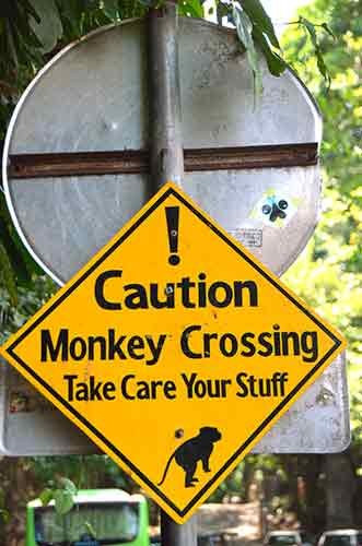 monkey crossing-AsiaPhotoStock