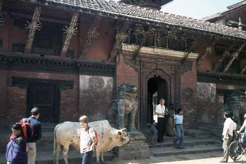 old temple and cow-AsiaPhotoStock
