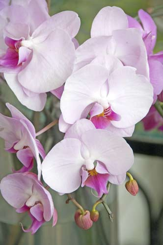 orchid11-AsiaPhotoStock