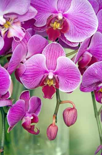 orchid12-AsiaPhotoStock