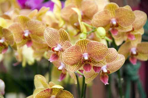 orchid16-AsiaPhotoStock