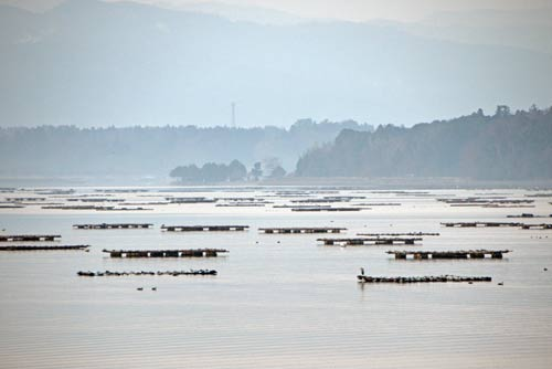 oyster beds-AsiaPhotoStock