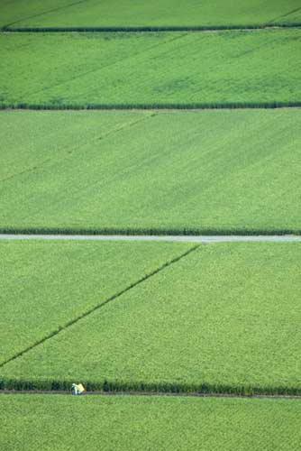 paddy fields-AsiaPhotoStock