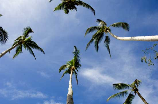 palms and blue sky-AsiaPhotoStock