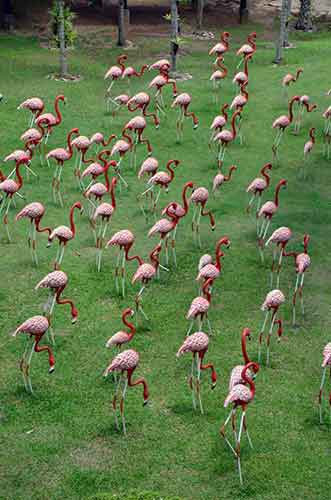 pink flamingoes-AsiaPhotoStock