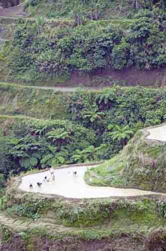 banaue rice workers-AsiaPhotoStock