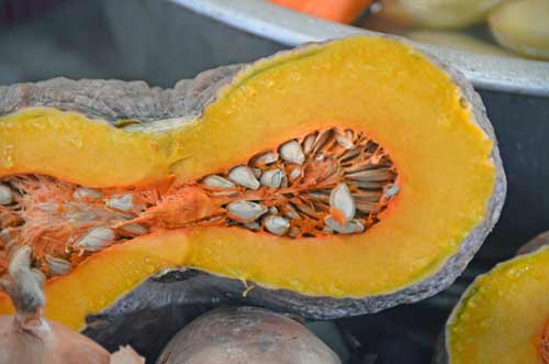 pumpkin cross section-AsiaPhotoStock