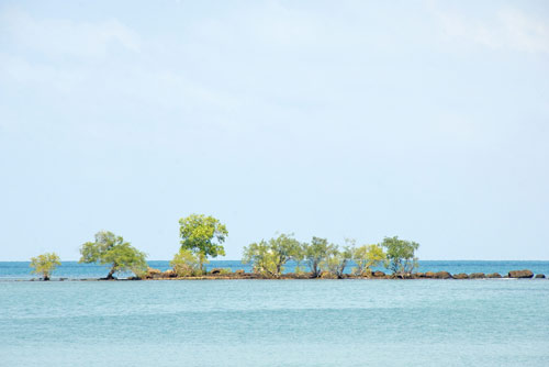 reef with trees-AsiaPhotoStock