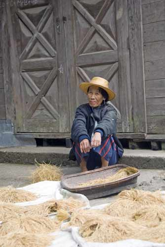 lady with her rice-AsiaPhotoStock