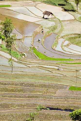 rice terraces java-AsiaPhotoStock