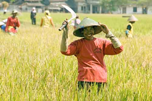 rice worker poses-AsiaPhotoStock
