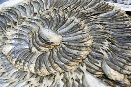 ring of dried fish-AsiaPhotoStock