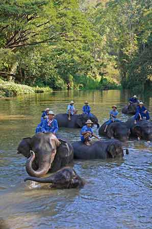 elephants in the river-AsiaPhotoStock
