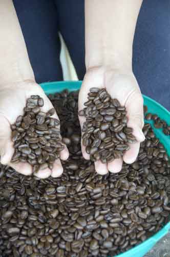 coffee beans-AsiaPhotoStock