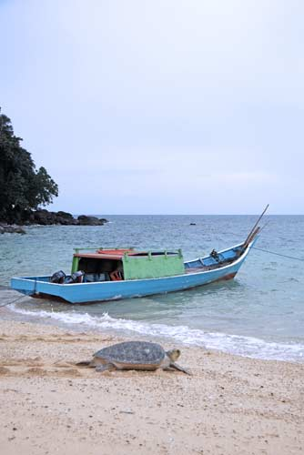 rocks and boat and  turtle-AsiaPhotoStock