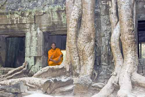 roots at ta prohm-AsiaPhotoStock