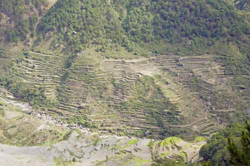 sagada terraces-AsiaPhotoStock