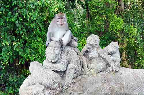 seat macaques-AsiaPhotoStock