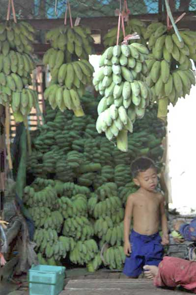 boy at banana stall-AsiaPhotoStock