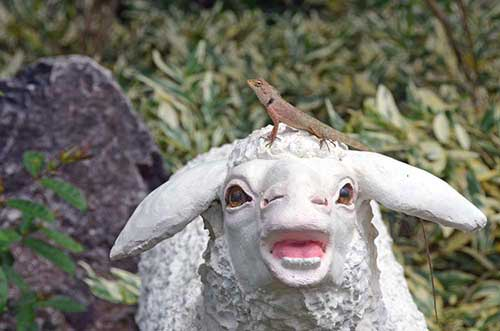 sheep and lizard-AsiaPhotoStock
