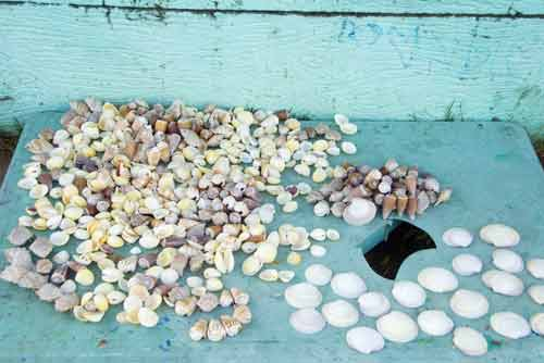 shells hundred islands-AsiaPhotoStock