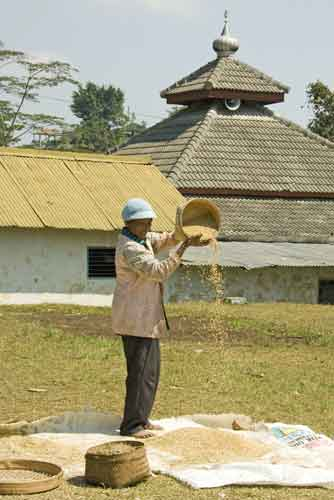 sieving rice solo-AsiaPhotoStock