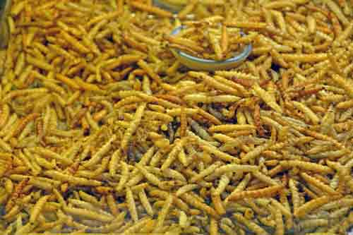 snack of fried grubs-AsiaPhotoStock