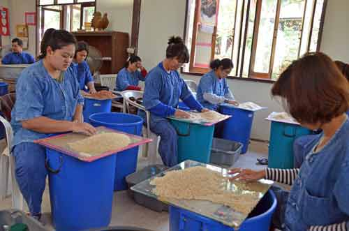 sorting rice by hand-AsiaPhotoStock