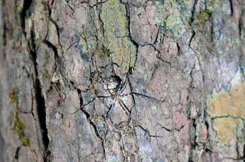 camouflaged spider-AsiaPhotoStock