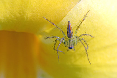 translucent spiders-AsiaPhotoStock