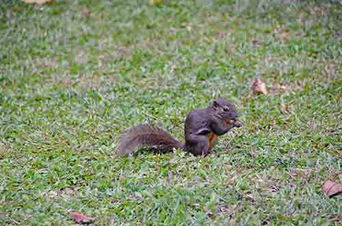 squirrel nibbling-AsiaPhotoStock