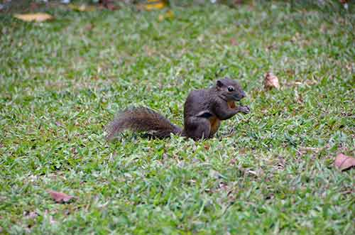 squirrel sitting up-AsiaPhotoStock