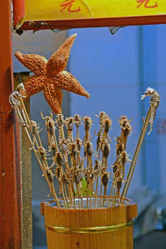 star fish and sea horse-AsiaPhotoStock