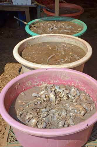 stinky fermented fish-AsiaPhotoStock