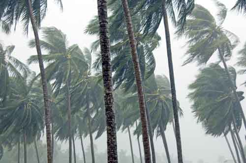 storm coconuts and rain-AsiaPhotoStock