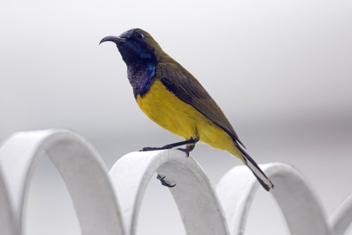 sunbird in city-AsiaPhotoStock