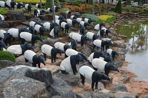 tapirs at nong nooch-AsiaPhotoStock