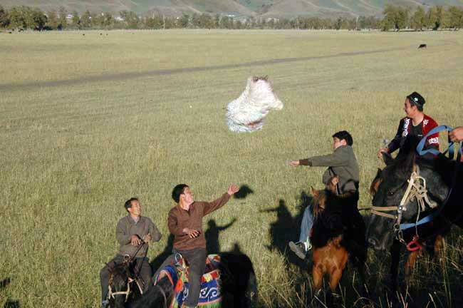 sheep throwing-AsiaPhotoStock