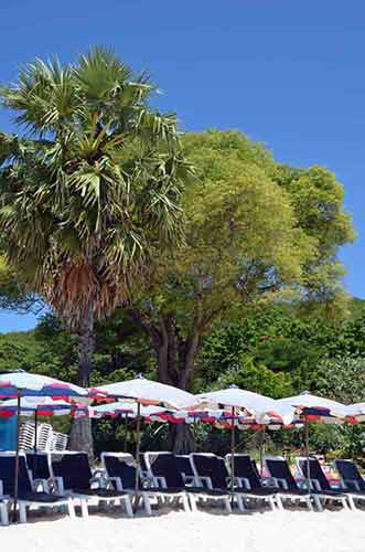 trees umbrellas-AsiaPhotoStock