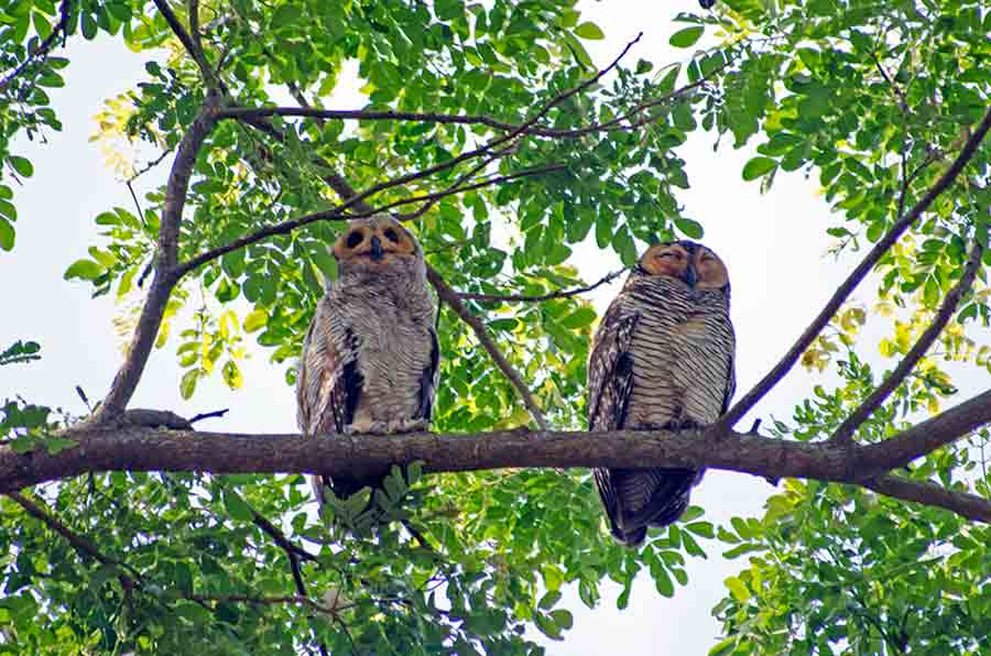two owls-AsiaPhotoStock