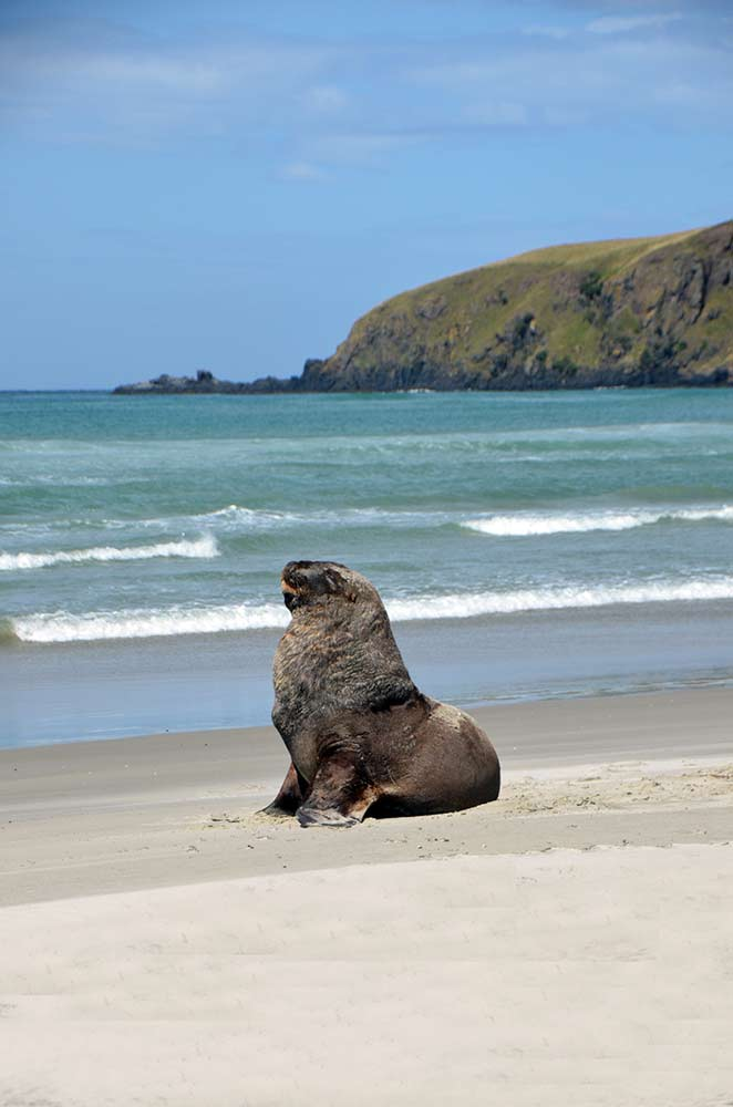 victory sea lion-AsiaPhotoStock