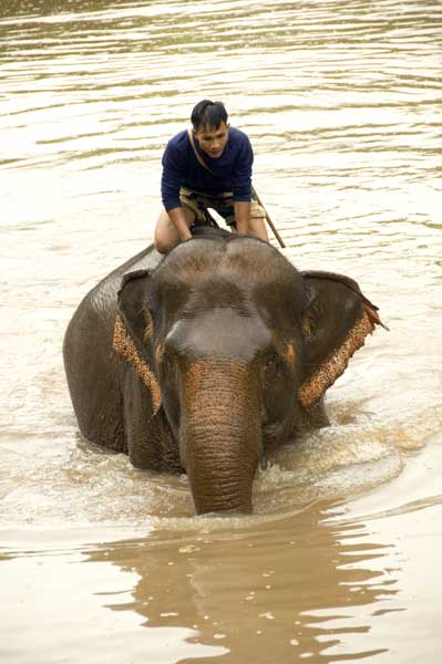 elephant in river-AsiaPhotoStock