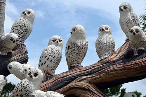 white owls-AsiaPhotoStock