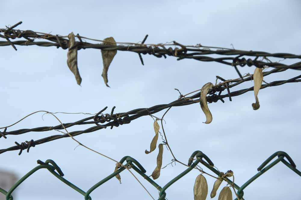 barbed wire-AsiaPhotoStock