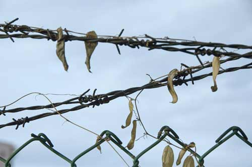 barbed wire-asia photo stock