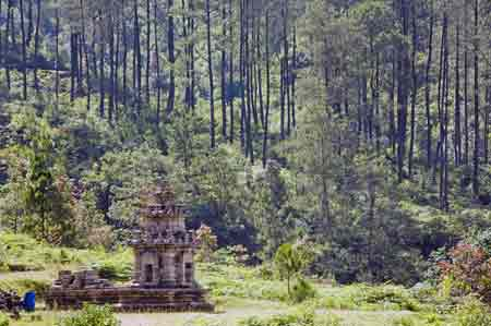 forest temple-AsiaPhotoStock